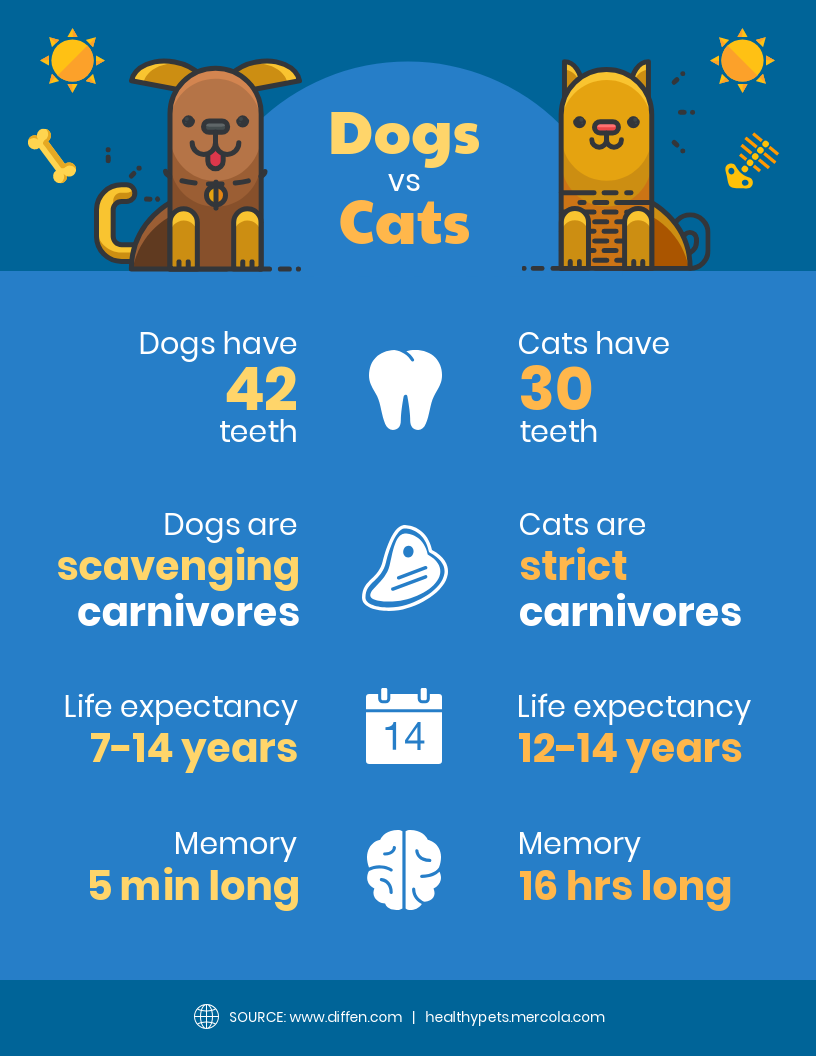 Dogs Vs Cats Comparison Infographic Choosing A Pet Can Be