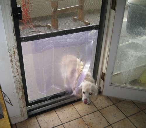 Easy Inexpensive Doggy Door In A Screen Door Doggies Screens And