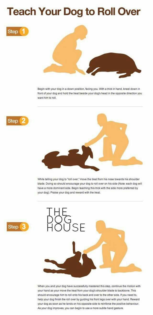 Teaching Your Dog To Roll Over Trick Puppy Training Dog