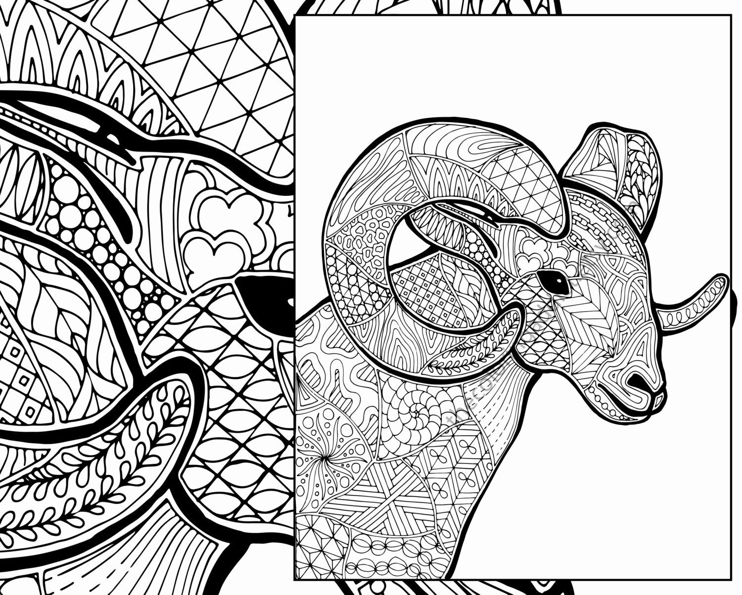Animal Coloring Pages Pdf Unique Ram Sheep Coloring Sheet Animal