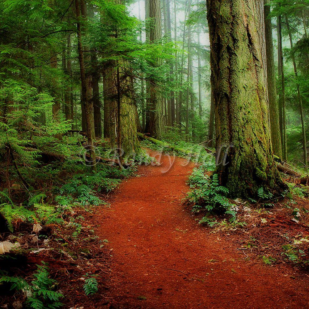 Mystical Trail - Heritage Forest, Qualicum Beach, BC | Qualicum ...