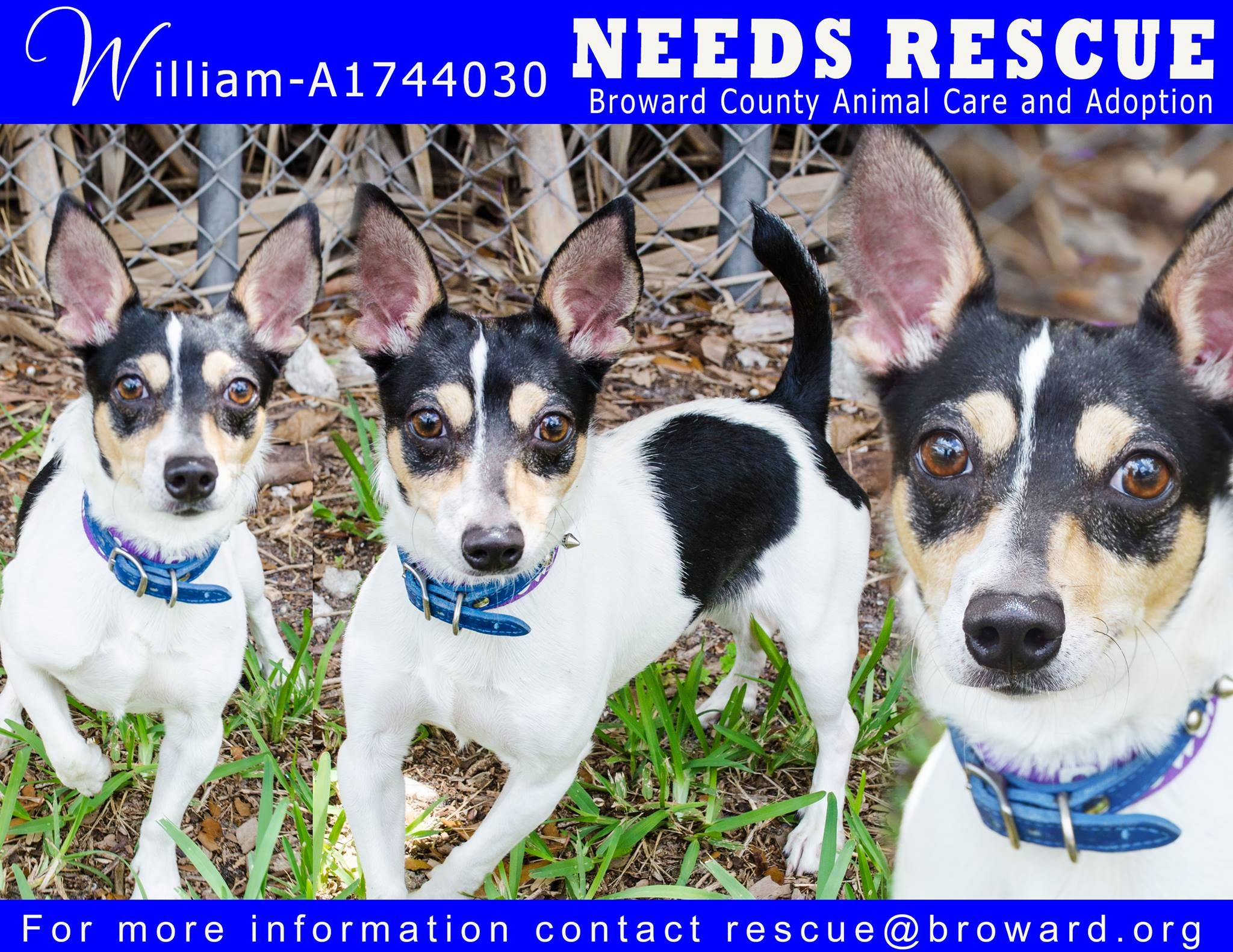 Urgent dogs of broward animal care and adoption page liked