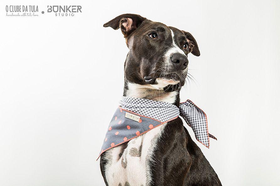 Samoa and the Vichy Grey & Dots Civic Dog® scarf, triangular pocket. http://civicdog.com/product/grey-vichy-salmon-dots-civic-dog-scarf-extra-large