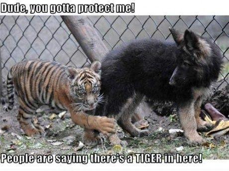 Dude Du Skal Beskytte Mig Sjovt Billede Sjove Billeder Sjovt Hunde
