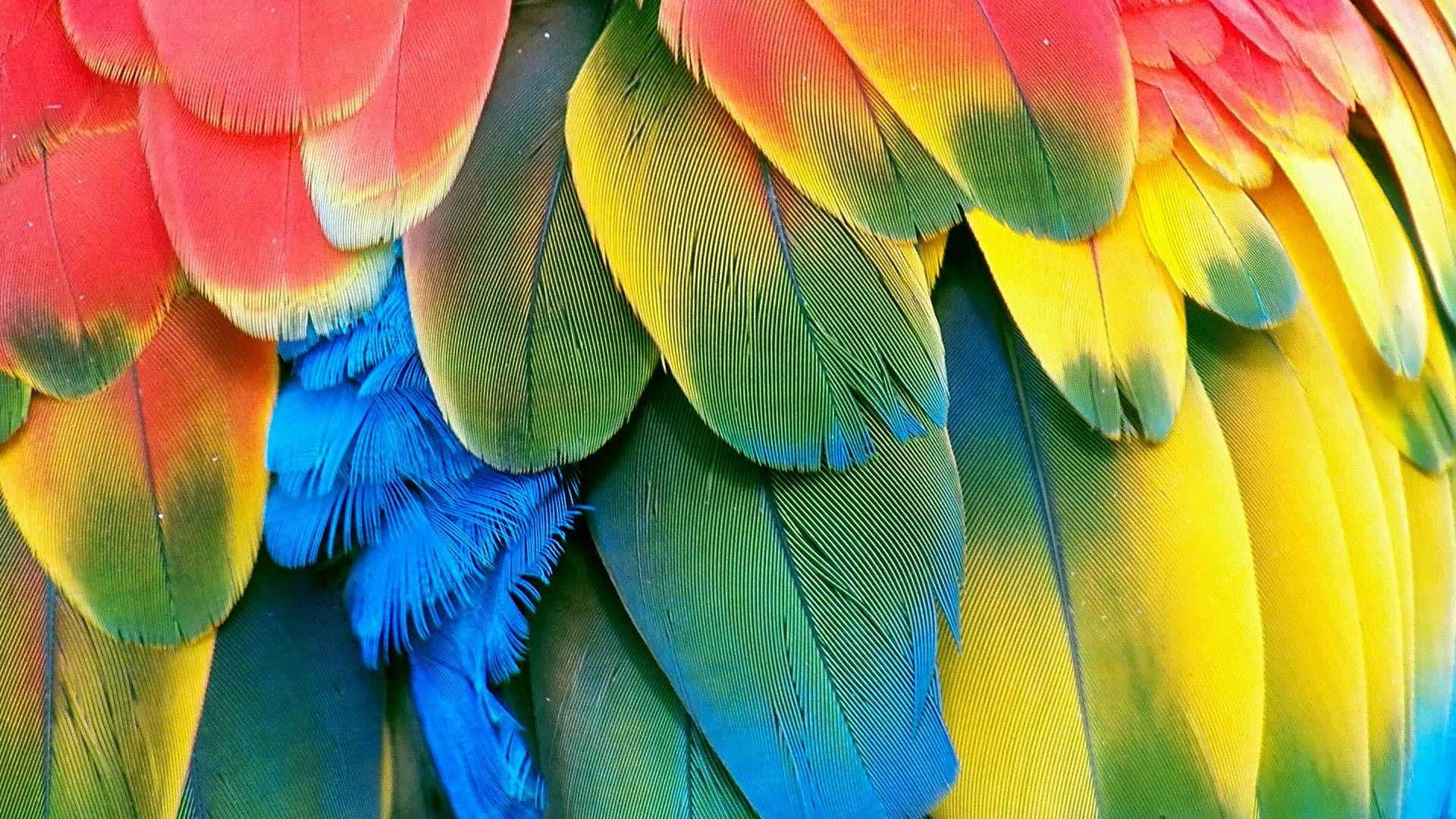 Parrots HD desktop wallpaper High Definition Fullscreen Mobile