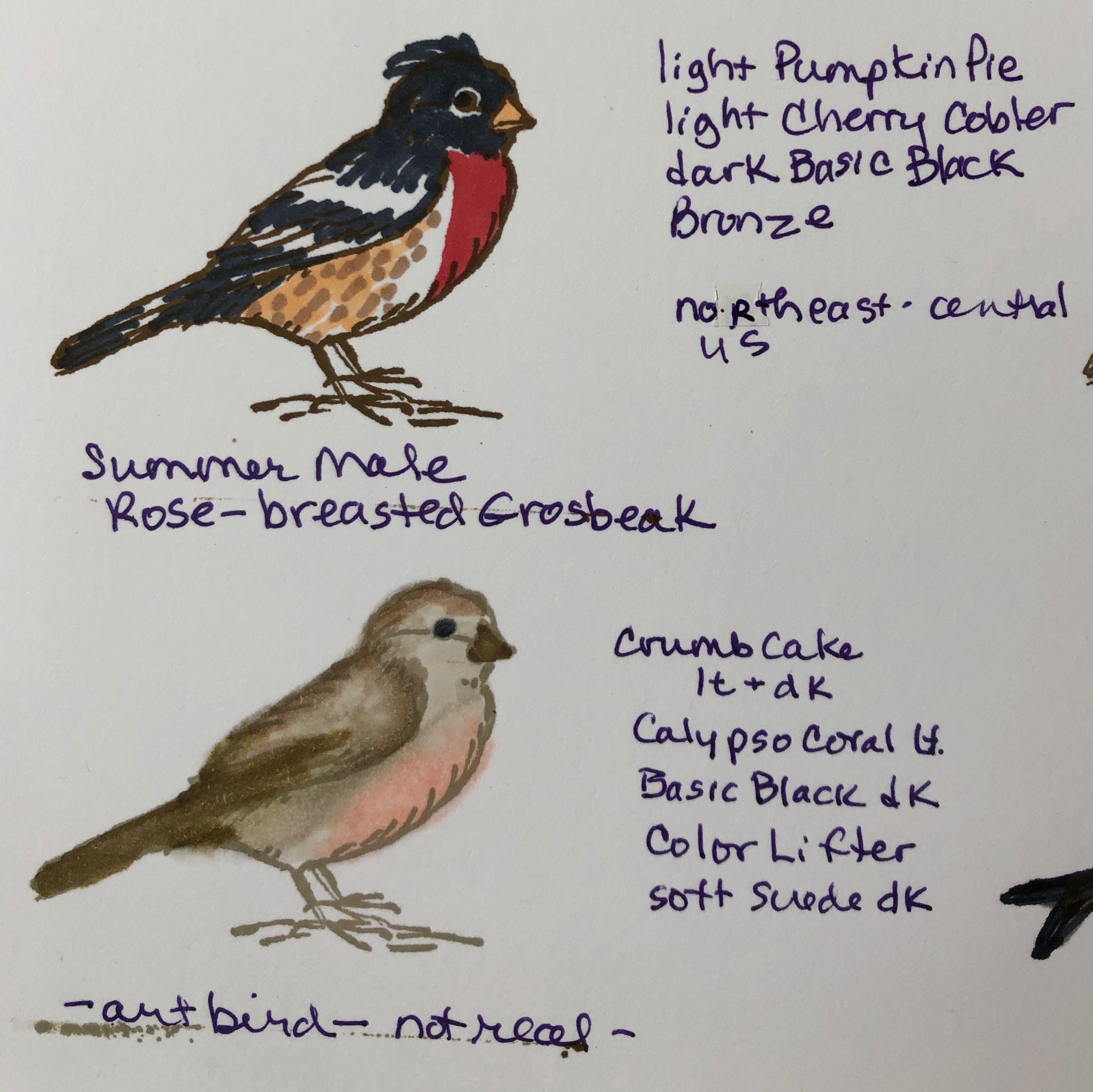 Su Stampin Blend Colors I Use To Replicate Birds Found In Georgia
