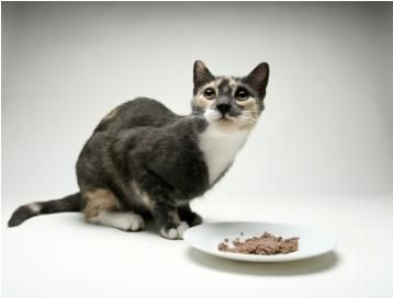 Top 5 Best Cat Foods Best Cat Food Cat Food Brands Canned Cat Food