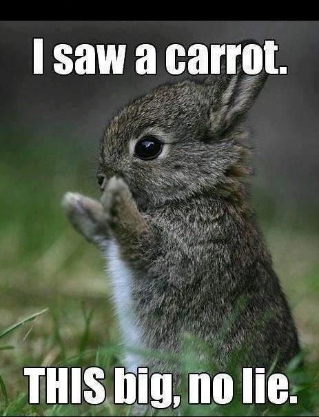 Giant carrot for the little bunny.