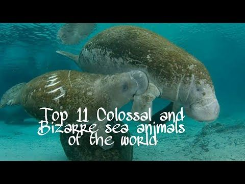 #Top11animals #Seaanimals Top 11 Colossal and Bizarre sea animals of the world | Bizarre life Series - YouTube