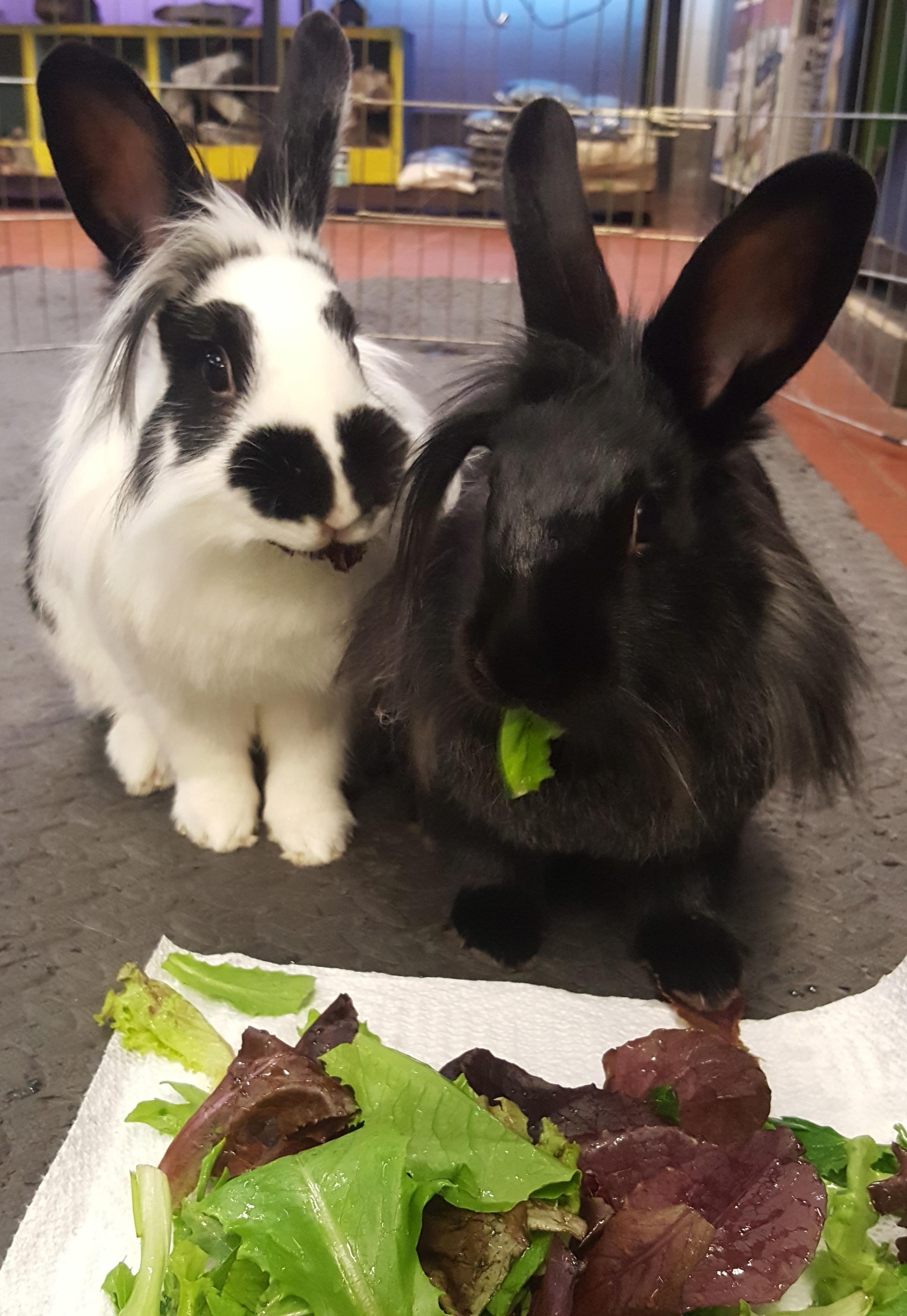 Adopt Sugarplum and Pineapple on Rabbit adoption