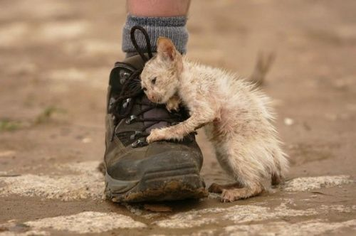 AWW!!! via Mociun on tumblr:   Kitten From October 2011 Floods in Thailand…    Suggestion: always treat animals with the same dignity and kindness, that you would want to be treated with…