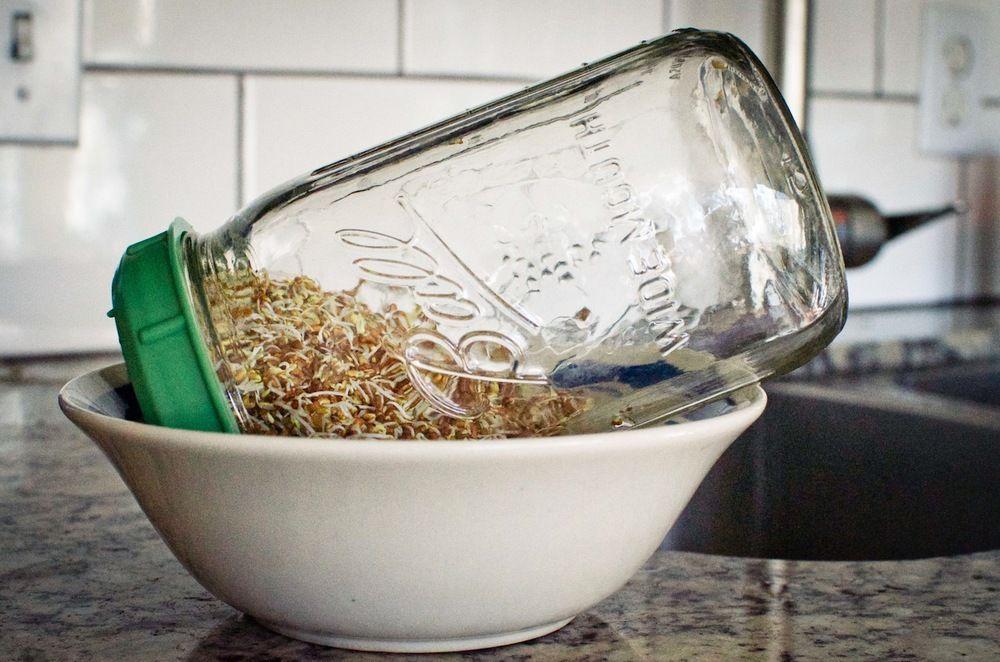 mason jar sprouting Google Search Organic plant food