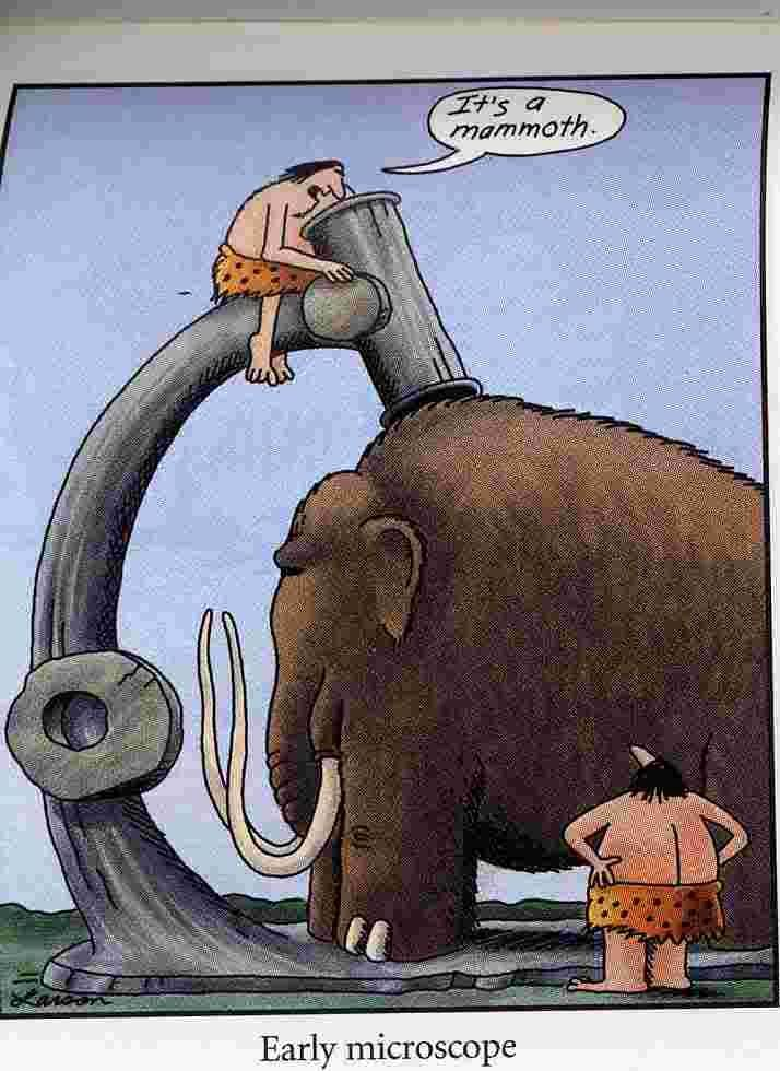 it s a mammoth the far side search the far side it s a mammoth