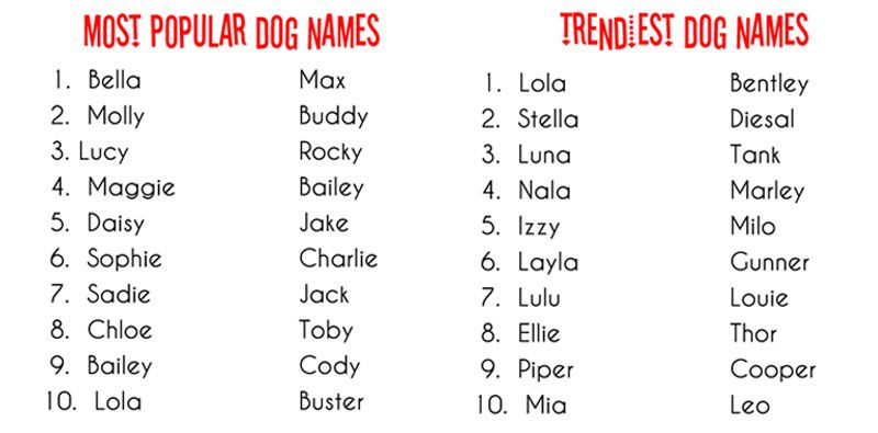 Talking Dogs At For Love Of A Dog What S In A Dog Name Dog Names Puppy Names Boy Puppy Names