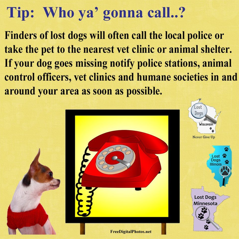 Pin By Kathy Pobloskie On Tips To Find Your Dog Losing A Dog Losing A Pet Vet Clinics