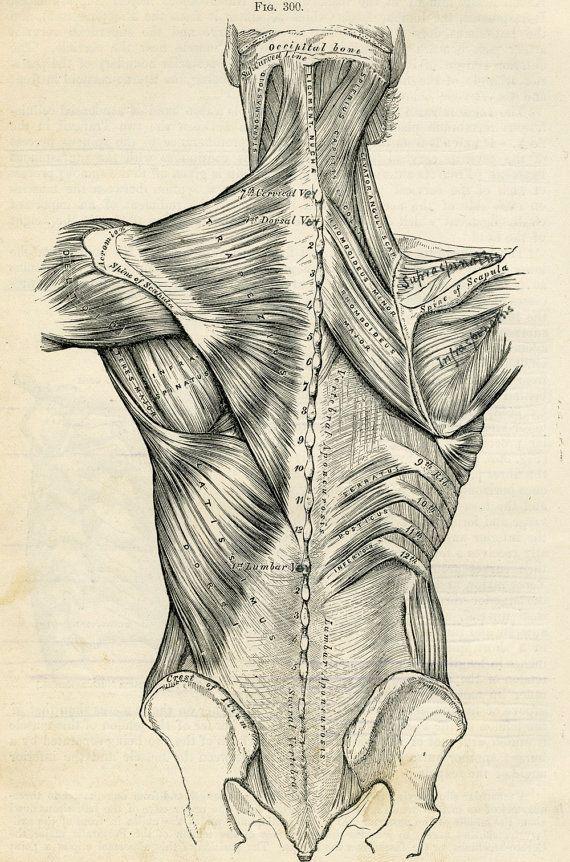 Human back human body anatomy illustration 1887 antique medical human back human body anatomy illustration 1887 antique medical plate via etsy ccuart Image collections
