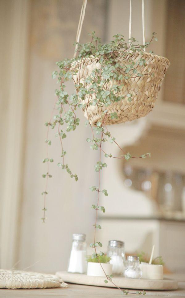 shopping design les petites emplettes plants flowers and gardens. Black Bedroom Furniture Sets. Home Design Ideas