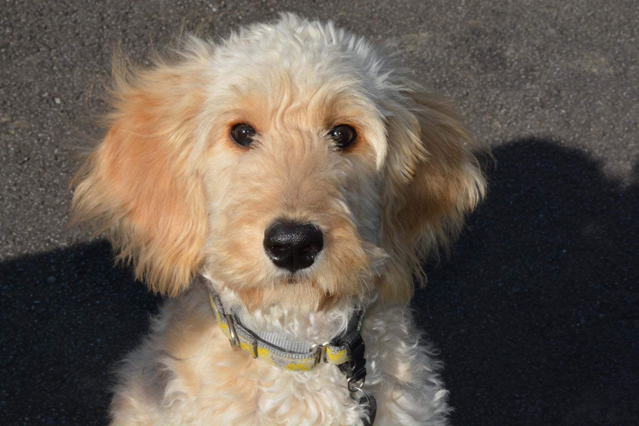 Adopt LucyOH on Adoption, Pet adoption, Pets