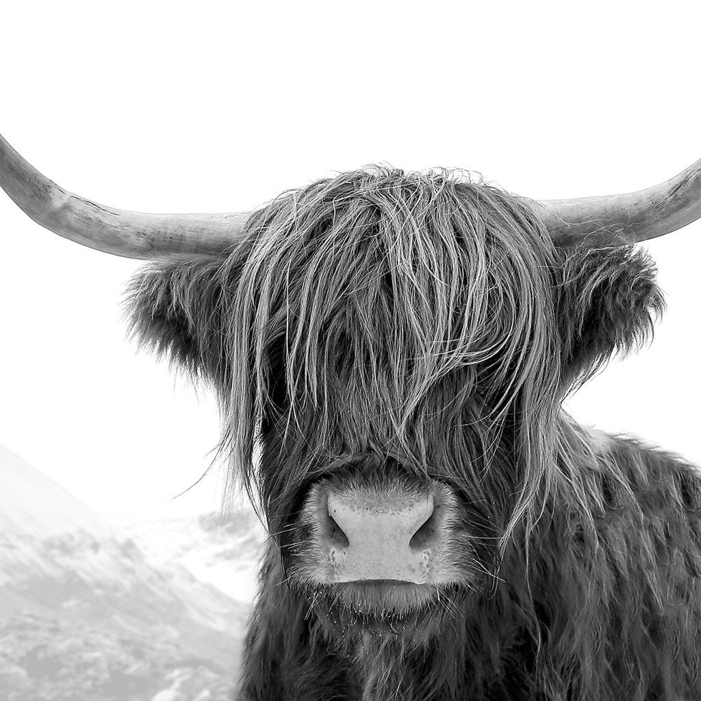 c514a2f659c Highland Cow Print (Black and White)
