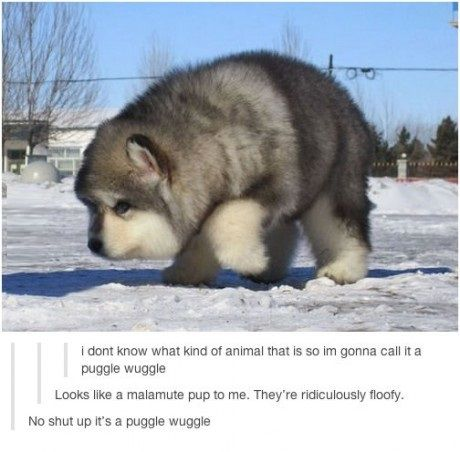 Hush peasant its a puggle wuggle.<< I want a puggle wuggle<< Can this be the national animal
