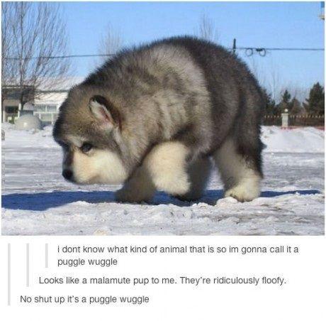 Hush peasant it's a puggle wuggle. . . And I want a puggle wuggle