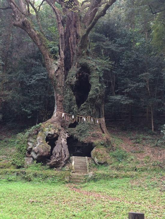 樹齢2000年超!悠久の時を刻む日本の巨木・大樹 |