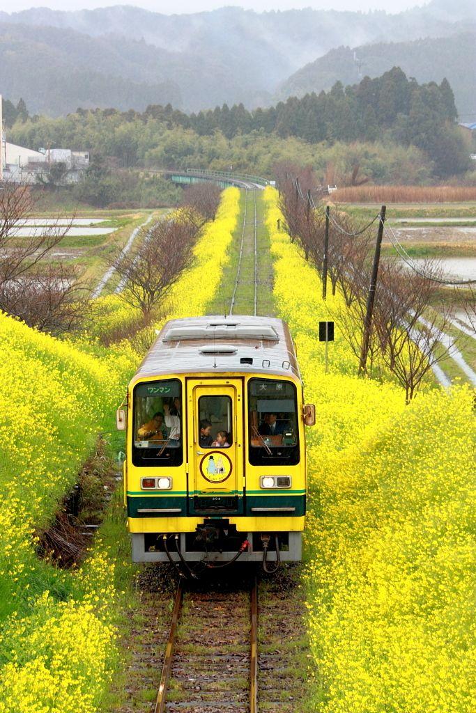 線路のある風景Ⅳ~雨の日~の画像(写真)  Isumi Line in Chiba, Japan (spring landscape of rape blossoms and cherry blossoms).