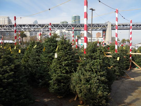 Delancey Street Christmas Trees.The Delancey Street Christmas Tree Lot On Pier 30 Where I
