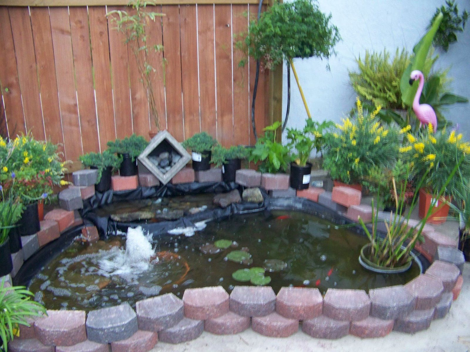 Koi pond concrete and block koi pond koi ponds for Koi pond plant ideas