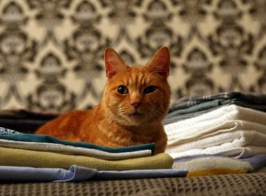Get Rid Of Cat Pee Smell
