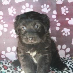 Adopt Daisy Tulsa On Golden Retriever Rescue Dogs Best Dog