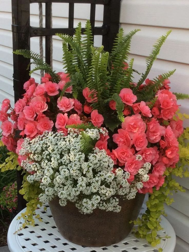 Photo of Best Container Flowers Annual Plants