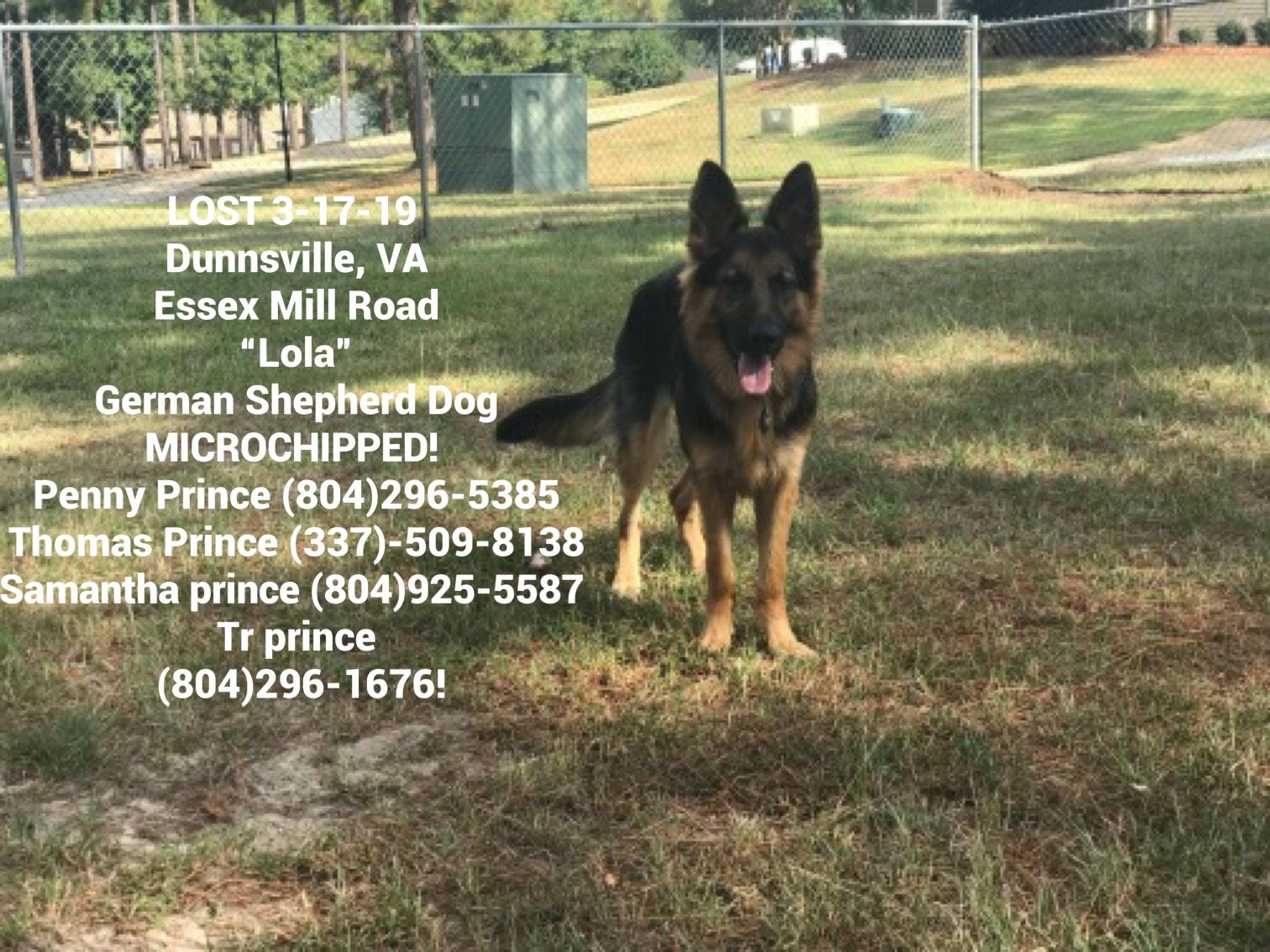 Lostdog 3 17 19 Dunnsville Va Essex Mill Road Lola