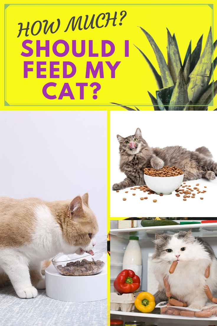 How Much Should I Feed My Cat Cats Cat Food Feeding