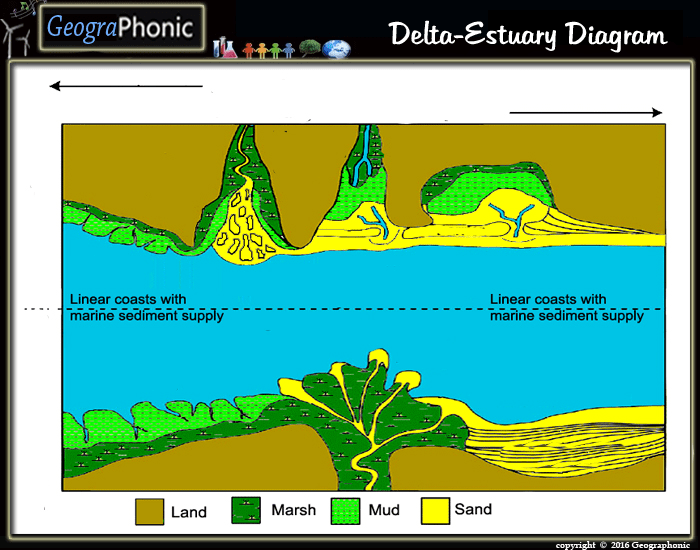 Free Quiz Game Delta Estuary Diagram Delta Estuary Deltas