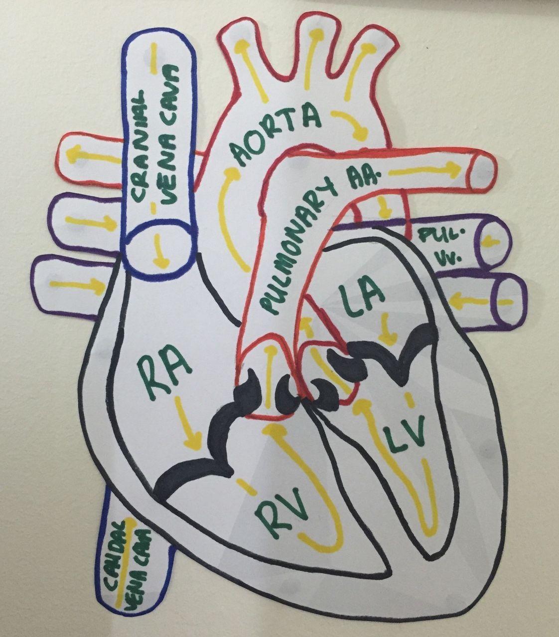 Life as a Vet Student : Photo | vet | Pinterest | Medicina ...