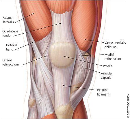 Anatomía de la rodilla | Rodilla | Pinterest | Anatomía de la ...