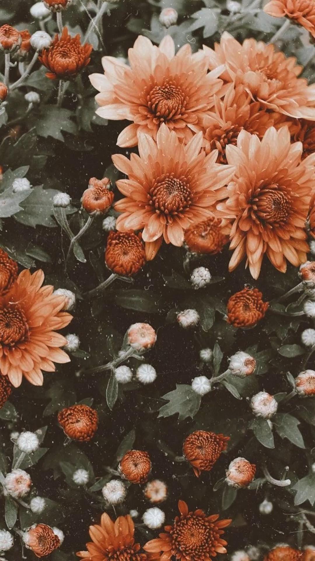 Vintage flower aesthetic 🌸🌷🌺🌼🌻🌹
