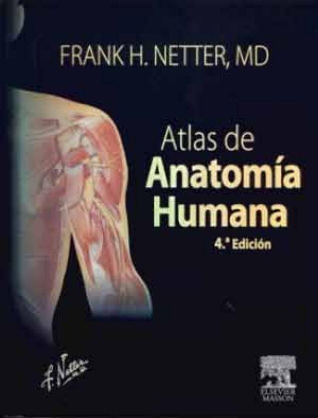 Netter atlas de anatomia humana | Education | Pinterest