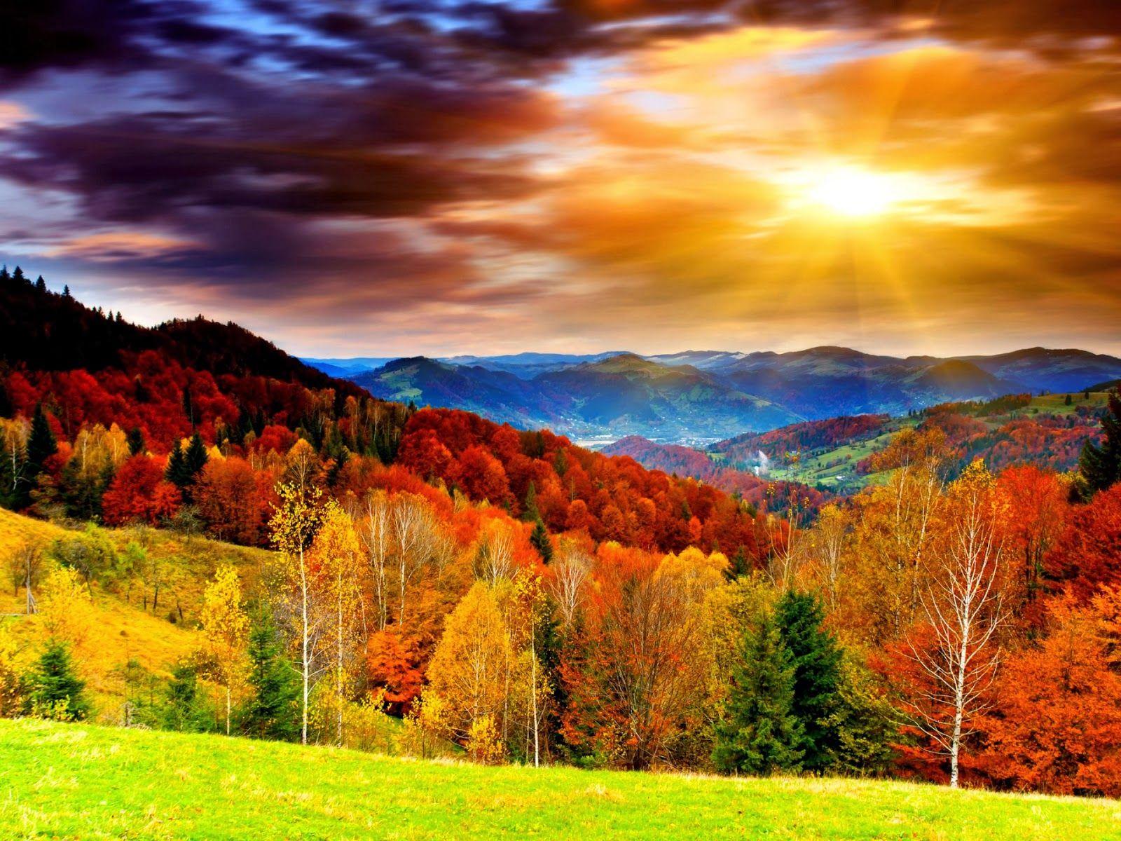Mega Sale Red Carpet Step And Repeat Backdrops Scenery Wallpaper Beautiful Scenery Wallpaper Autumn Landscape