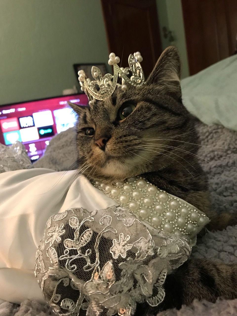 Princess Dress Tumblr Princess Dress Dresses Crazy Cat Lady