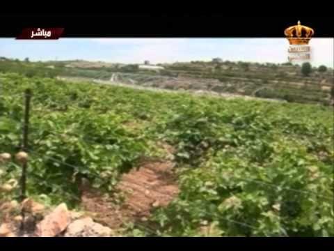 يوم جديد من القدس تقرير ميداني من محافظة الخليل في فلسطين Plants Farmland Palestine