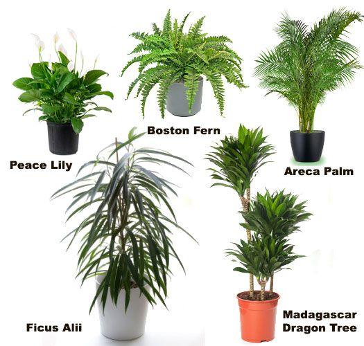 Assorted | Palm plant, Plants, House plants