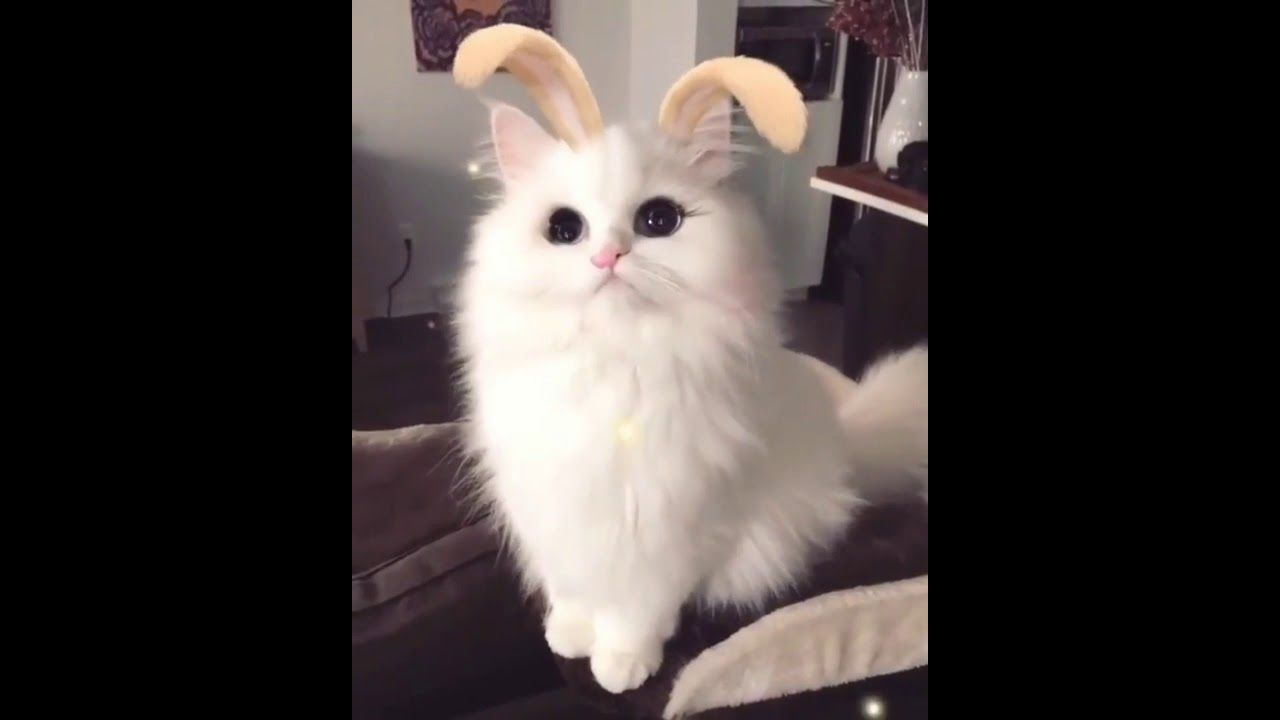 Cats Are So Funny Cat Video Cats Cat Gif Funny Cat Videos