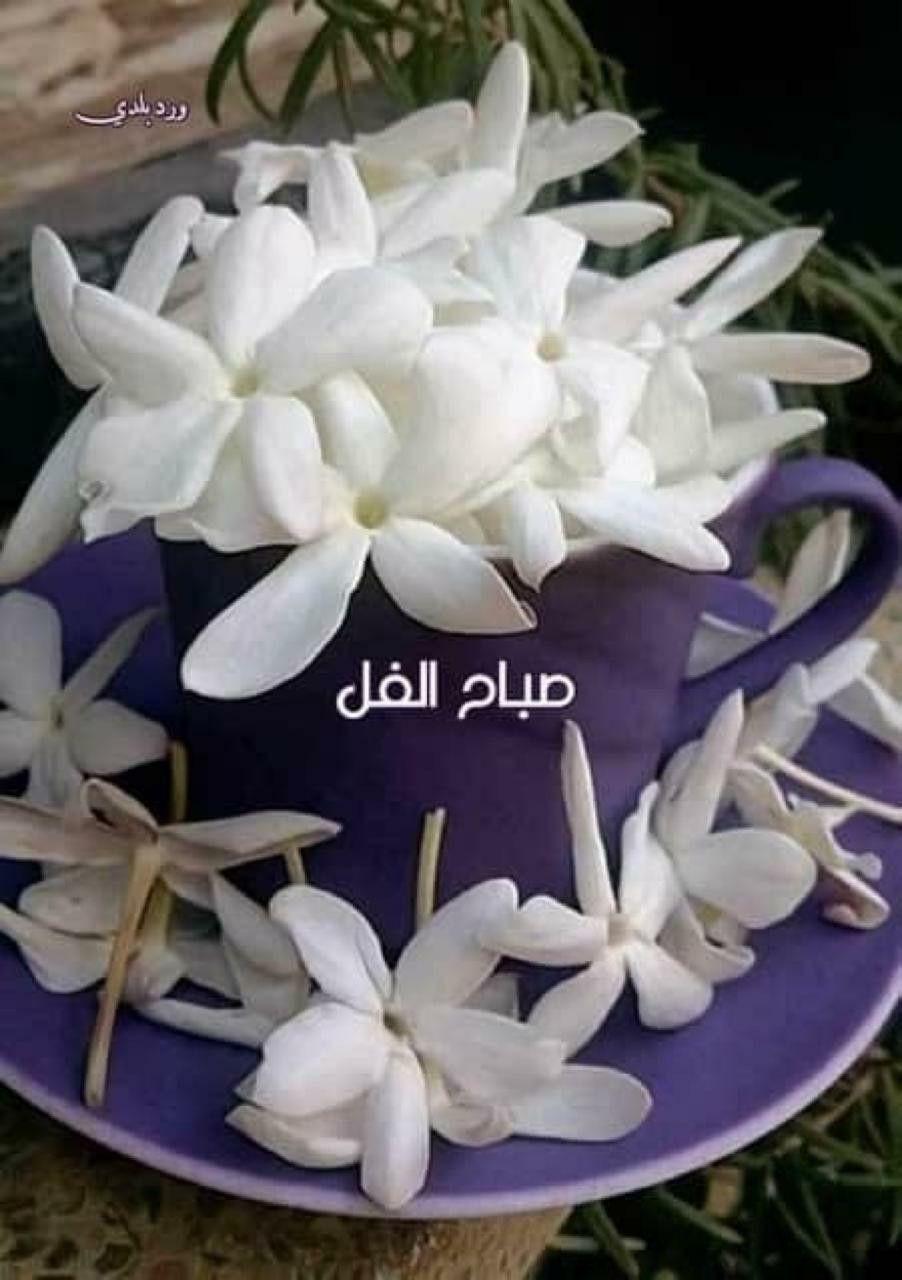 Pin By Ahmed Hisen أحمد حسين On Morning Day Evening صباح يوم ومساء Succulents Plants Good Morning