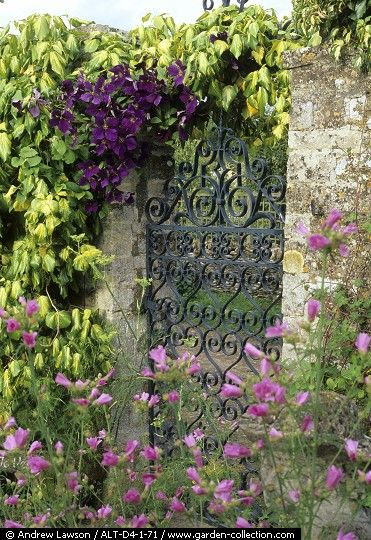 A lovely wrought iron gateway covered with vines through a Portal - so enchanting.