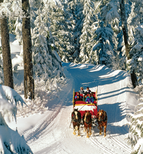 Grouse Mountain Sleigh Ride