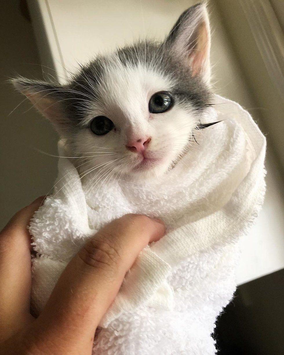 Man Heard Kitten S Cries In Backyard And Found 3 Kitties Needing Help Love Meow Kittens Cute Cats And Kittens Kitty