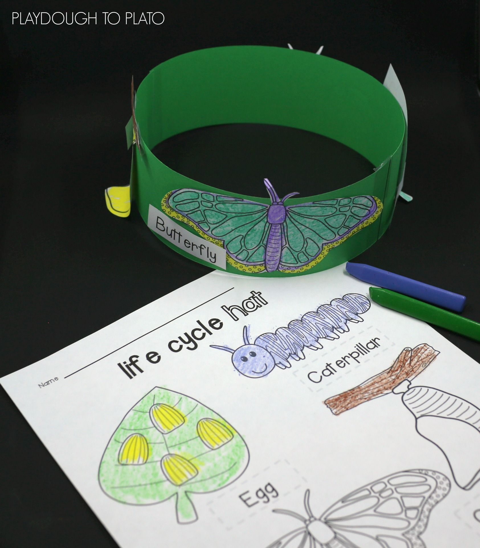 Butterfly Life Cycle Hats | Butterfly life cycle, Art activities and ...