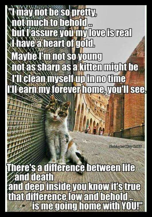 Adopt Feral Cats Nothing Is More Rewarding Feral Cats Animals Kittens